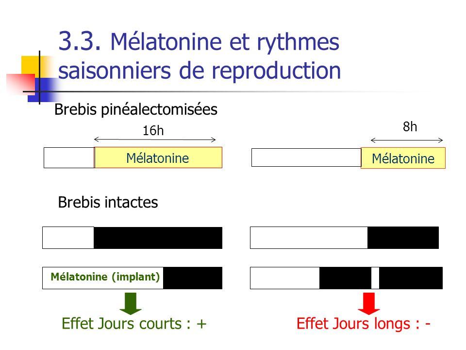 3.3. Mélatonine et rythmes saisonniers de reproduction Brebis pinéalectomisées Mélatonine Effet Jours courts : +Effet Jours longs : - 8h 16h Mélatonin