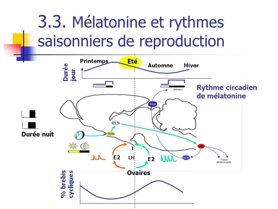 3.3. Mélatonine et rythmes saisonniers de reproduction Durée nuit Rythme circadien de mélatonine E2 Ovaires E2 LH % brebis cycliques Hiver Printemps A