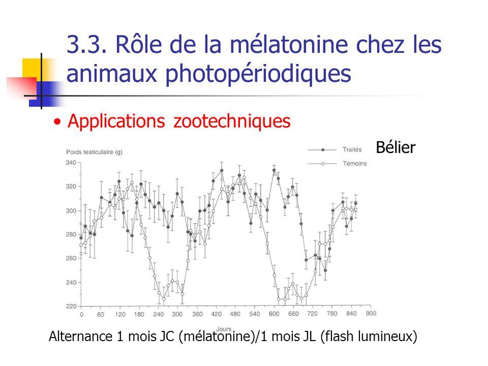 3.3. Rôle de la mélatonine chez les animaux photopériodiques Applications zootechniques Bélier Alternance 1 mois JC (mélatonine)/1 mois JL (flash lumi
