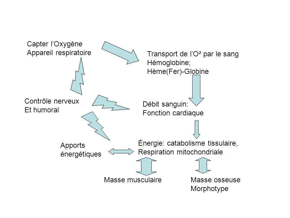 Capter lOxygène Appareil respiratoire Transport de lO² par le sang Hémoglobine; Hème(Fer)-Globine Débit sanguin: Fonction cardiaque Énergie: catabolis