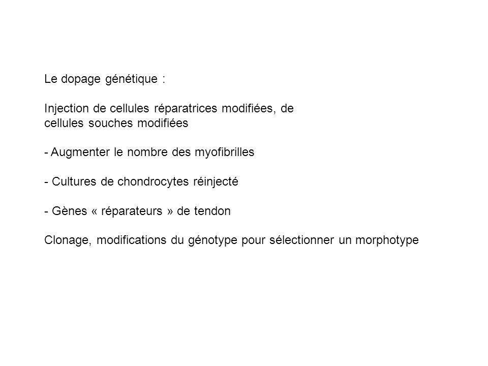 Le dopage génétique : Injection de cellules réparatrices modifiées, de cellules souches modifiées - Augmenter le nombre des myofibrilles - Cultures de