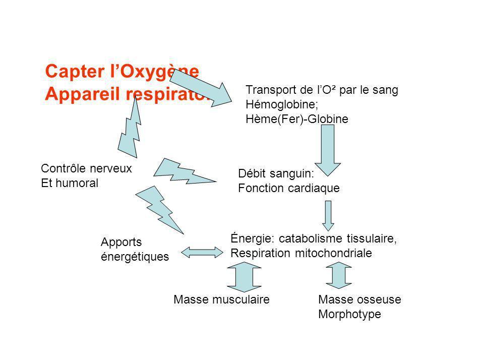 Capter lOxygène Appareil respiratoire Transport de lO² par le sang Hémoglobine; Hème(Fer)-Globine Débit sanguin: Fonction cardiaque Énergie: catabolisme tissulaire, Respiration mitochondriale Masse musculaire Masse osseuse Morphotype Contrôle nerveux Et humoral Apports énergétiques