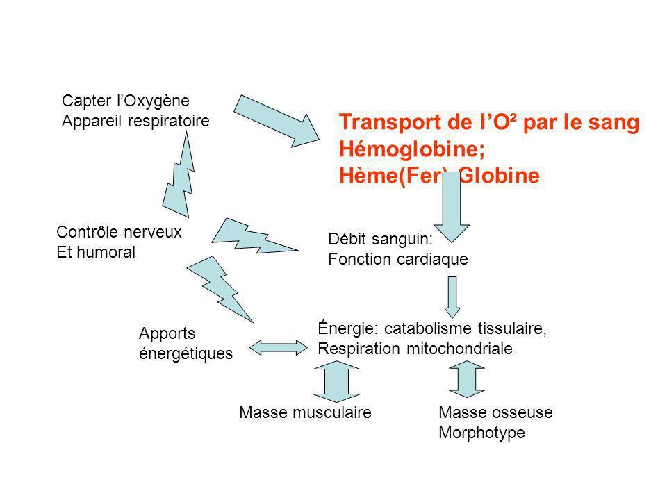 LO² est transporté sous forme dissoute et lié au Fer de lhémoglobine: - Variations naturelles en fonction de la Po² et sous laction de lEPO synthétisée par le rein, augmente légèrement à lentraînement - Augmenter la charge en Fer du GR par supplémentation martiale, non éliminée spontanément, risque dhémochromatose - Augmenter le nombre de GR en réponse à une hypoxie (naturelle, Altitude; artificielle caisson), persiste 4 à 6 semaines - EPO (de synthèse identique à lhumaine); stimule la fabrication des GR - Transfusion autologue ou hétérologue, GR à partir dune cellule souche Augmentation temporaire de 30 à 45j du nb.