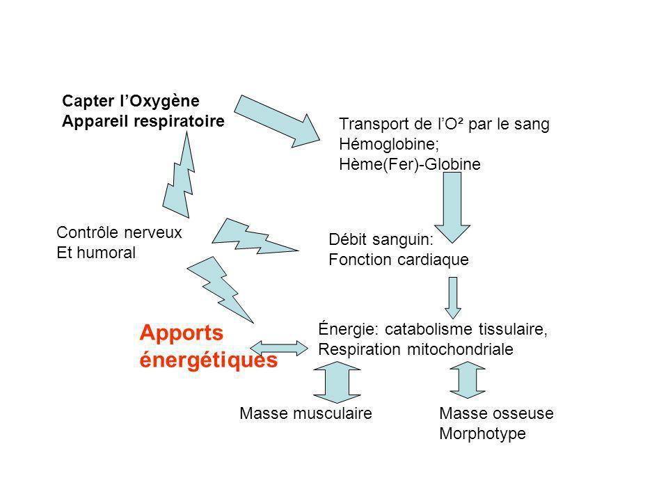La nutrition de leffort repose sur lassociation glucido-lipidique; les apports Hydro électrolytiques, les « co-facteurs » que sont les vitamines.