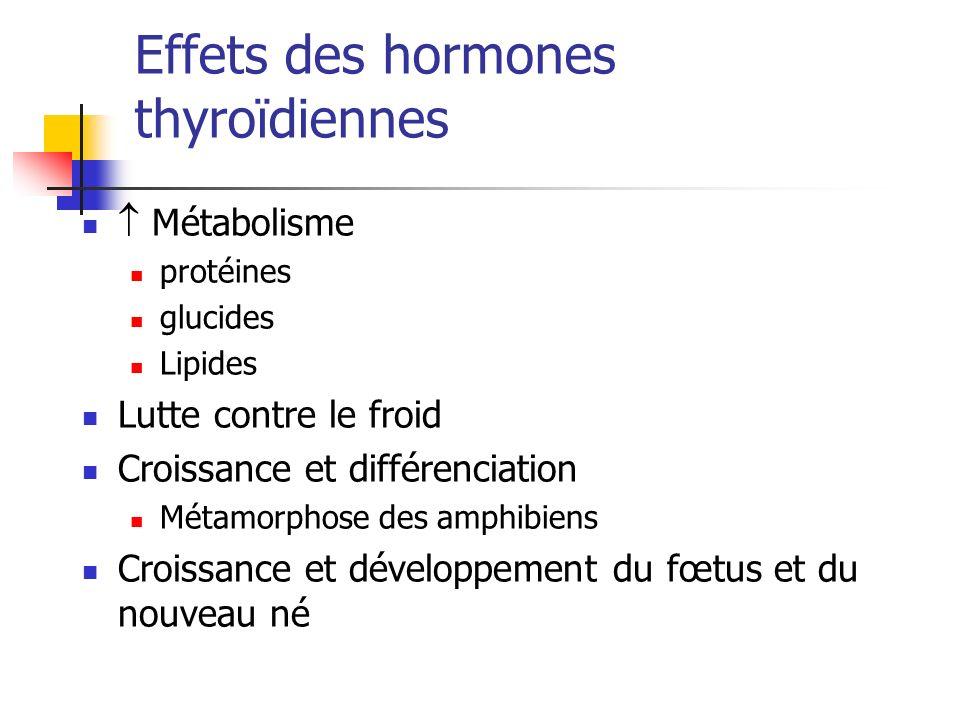Effets des hormones thyroïdiennes Métabolisme protéines glucides Lipides Lutte contre le froid Croissance et différenciation Métamorphose des amphibie