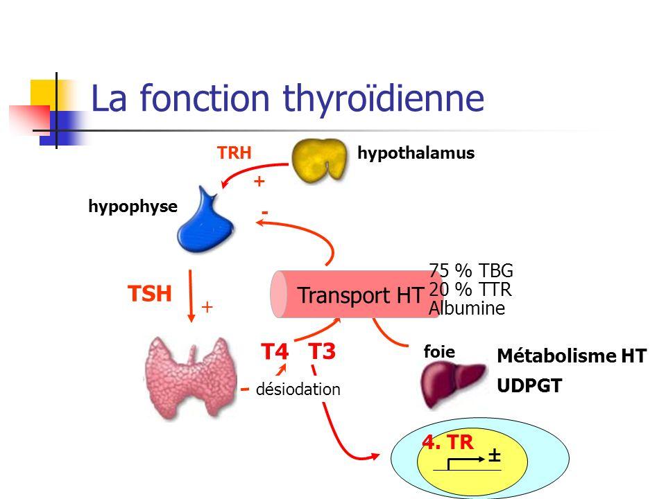 La fonction thyroïdienne hypothalamus Métabolisme HT UDPGT T4 T3 foie - TSH TRH + + hypophyse Transport HT 4. TR ± désiodation 75 % TBG 20 % TTR Album