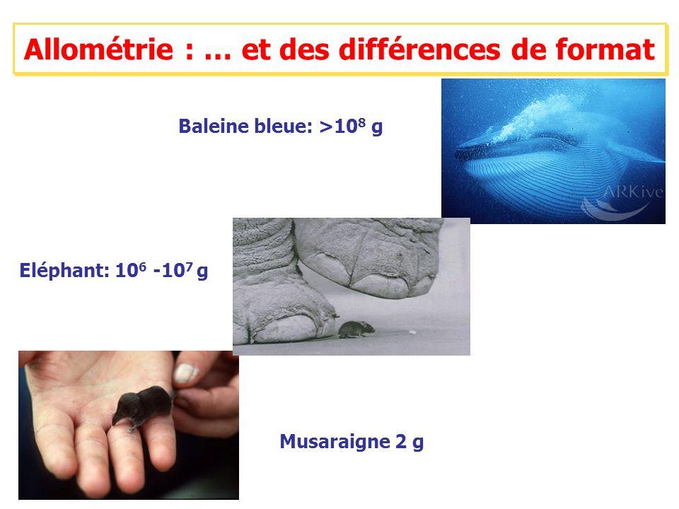 Baleine bleue: >10 8 g Musaraigne 2 g Eléphant: 10 6 -10 7 g Allométrie : … et des différences de format