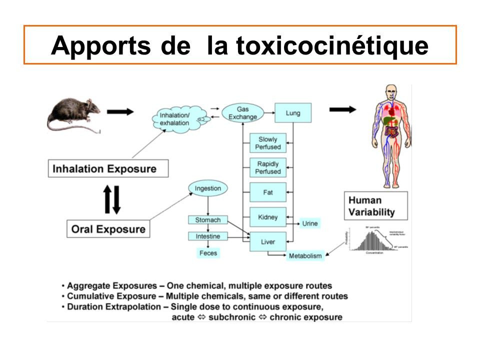 Apport de la toxicocinétique à lévaluation de lexposition interne