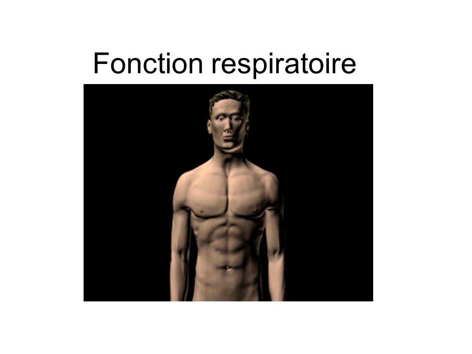 Fonction respiratoire
