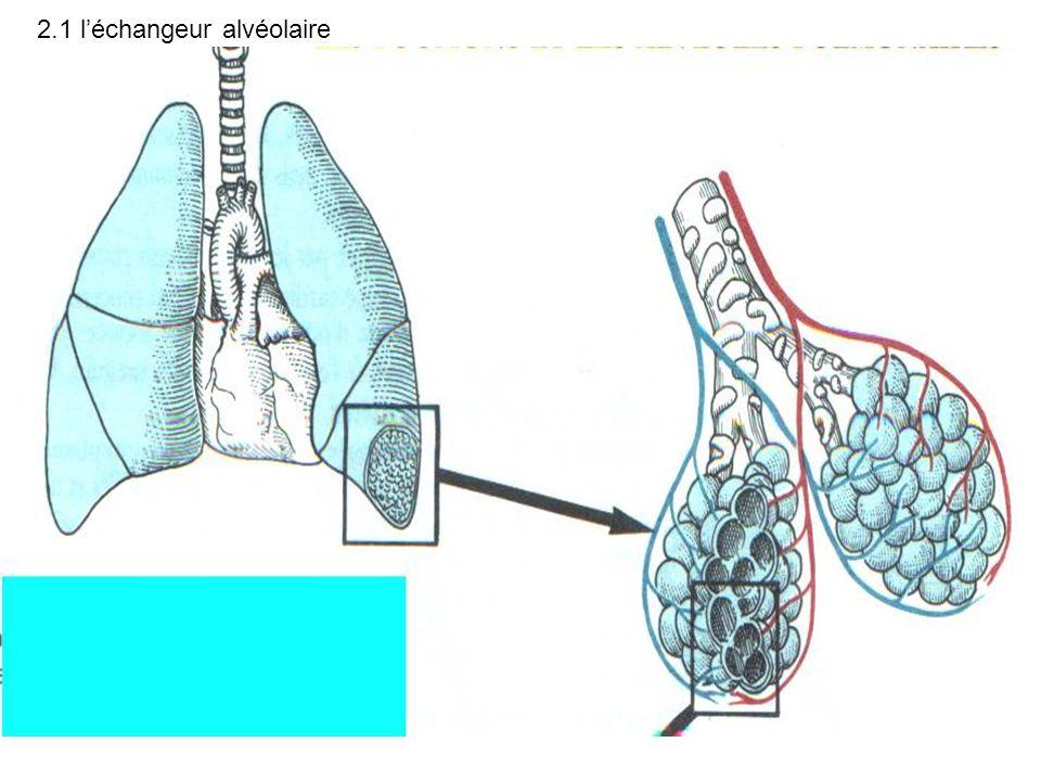 2.1 léchangeur alvéolaire