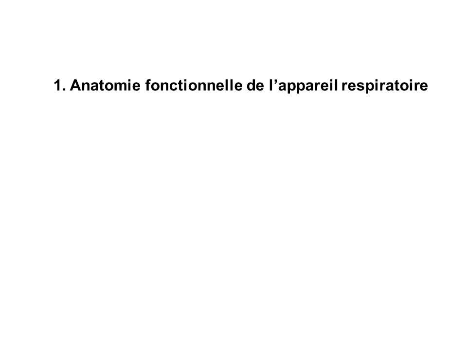 1.1 justification de lappareil respiratoire; De lair ambiant à la mitochondrie et au cycle de krebs…