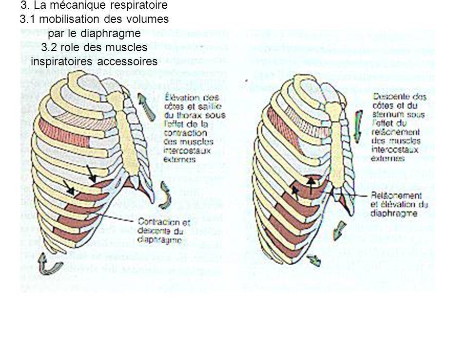 3. La mécanique respiratoire 3.1 mobilisation des volumes par le diaphragme 3.2 role des muscles inspiratoires accessoires