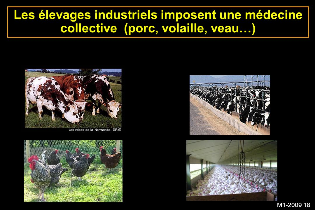 M1-2009 18 Les élevages industriels imposent une médecine collective (porc, volaille, veau…)