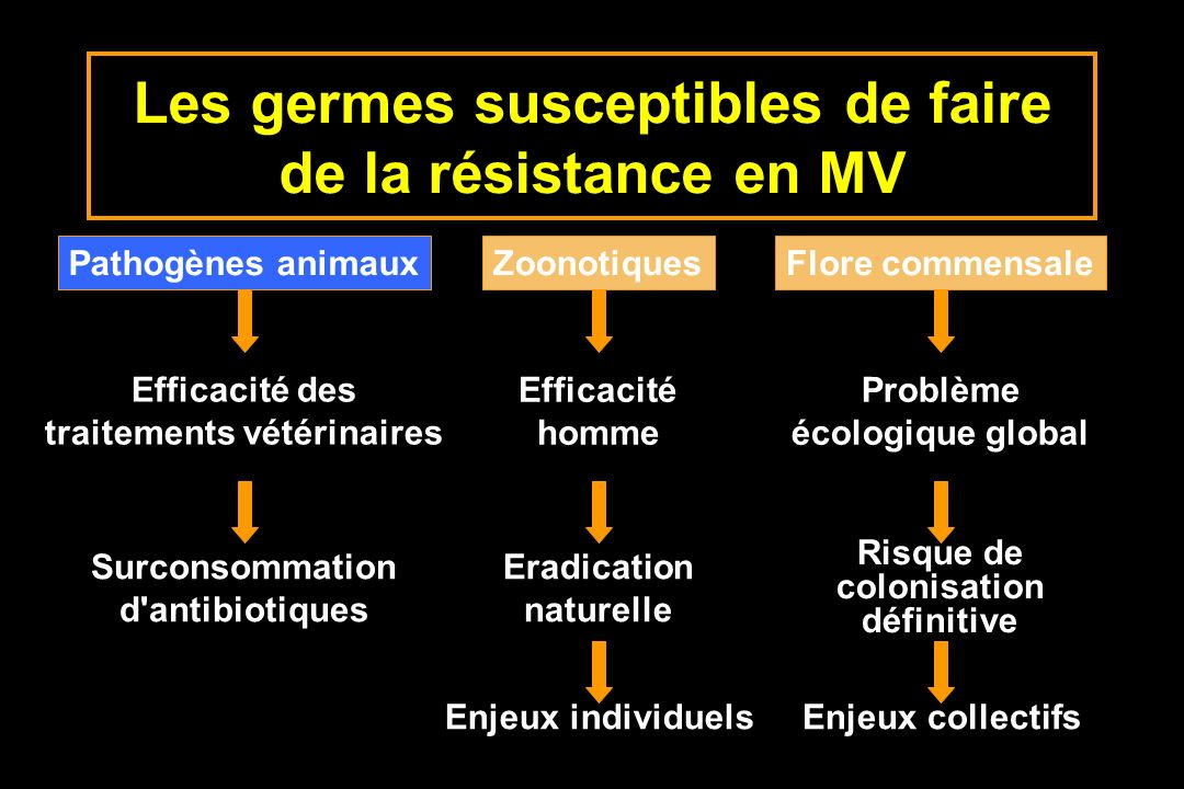 Les germes susceptibles de faire de la résistance en MV Pathogènes animauxZoonotiquesFlore commensale Efficacité des traitements vétérinaires Efficaci