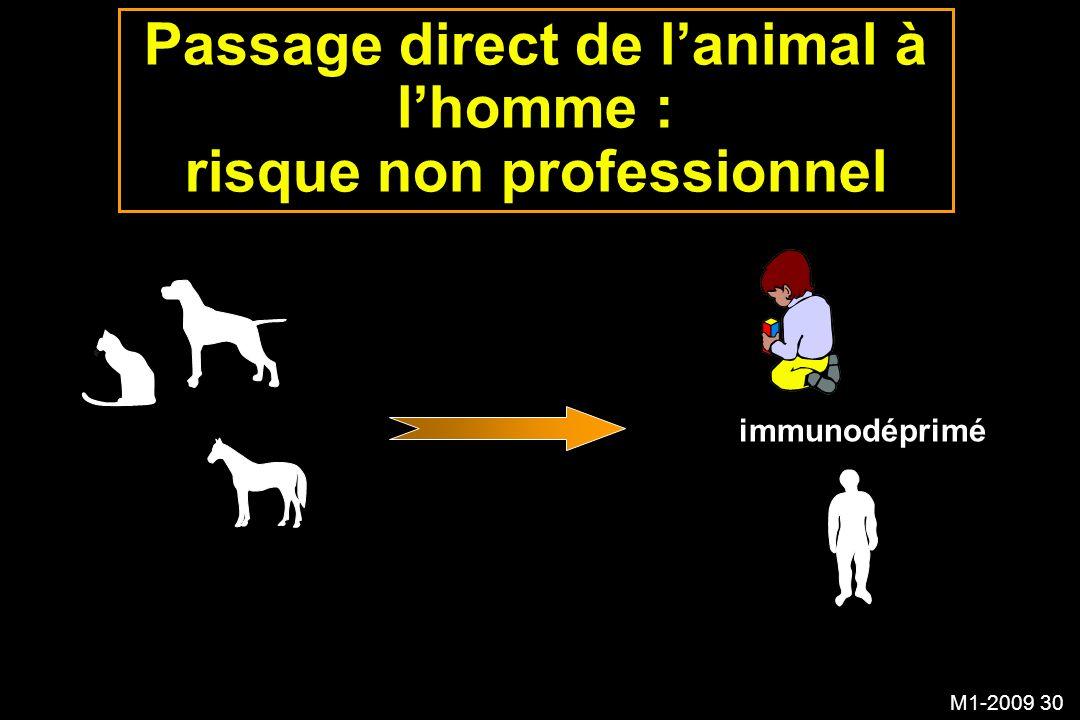 M1-2009 30 immunodéprimé Passage direct de lanimal à lhomme : risque non professionnel