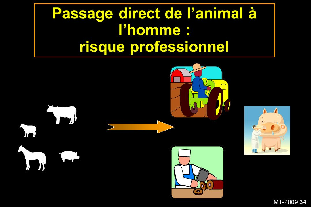 M1-2009 34 Passage direct de lanimal à lhomme : risque professionnel