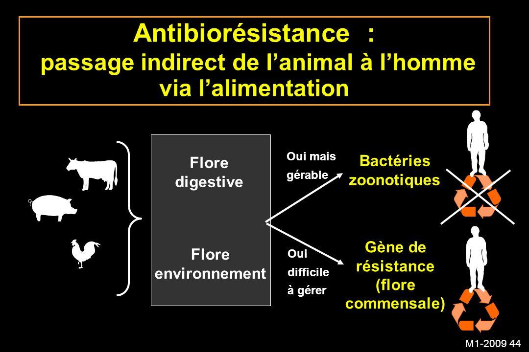 M1-2009 44 Antibiorésistance : passage indirect de lanimal à lhomme via lalimentation Flore digestive Flore environnement Bactéries zoonotiques Gène d