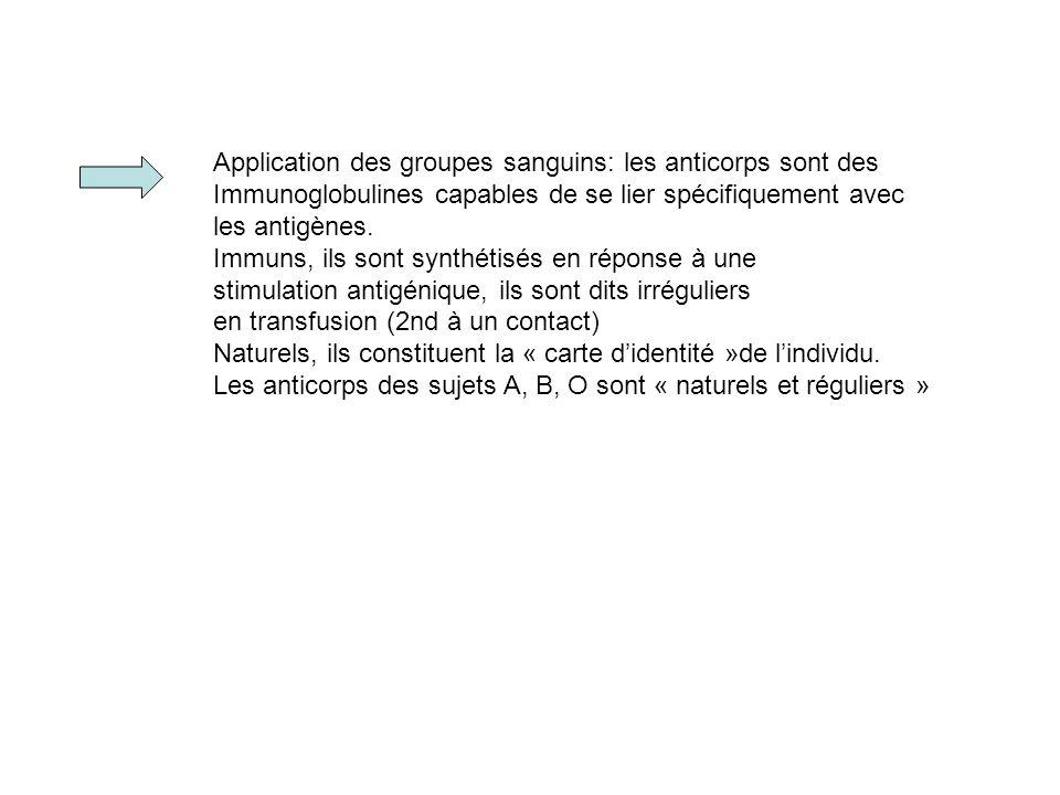 Application des groupes sanguins: les anticorps sont des Immunoglobulines capables de se lier spécifiquement avec les antigènes. Immuns, ils sont synt