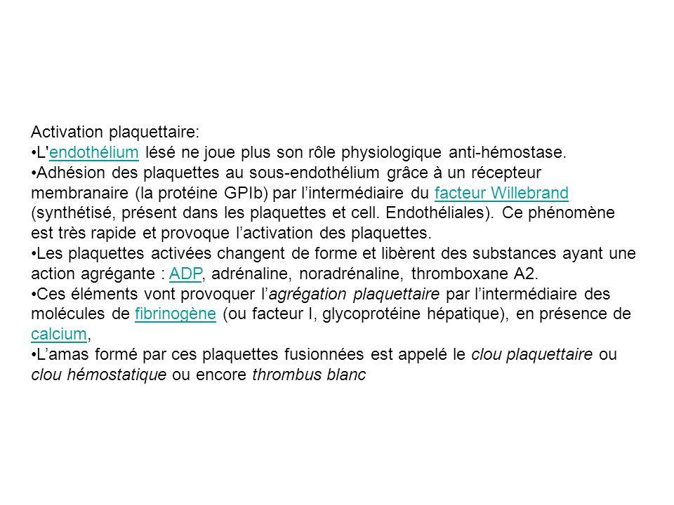 Activation plaquettaire: L'endothélium lésé ne joue plus son rôle physiologique anti-hémostase.endothélium Adhésion des plaquettes au sous-endothélium