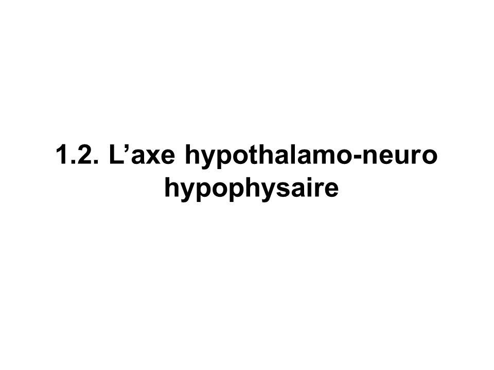 1.2. Laxe hypothalamo-neuro hypophysaire