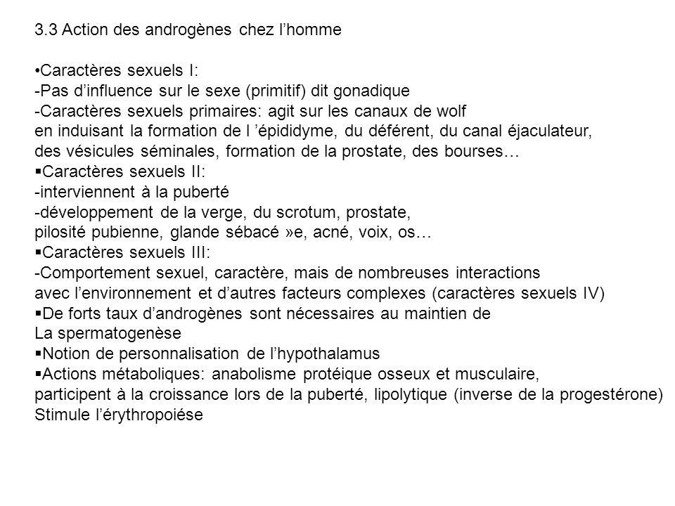 3.3 Action des androgènes chez lhomme Caractères sexuels I: -Pas dinfluence sur le sexe (primitif) dit gonadique -Caractères sexuels primaires: agit s
