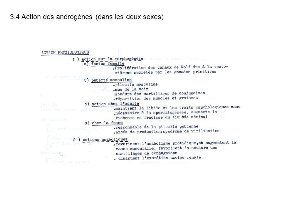 3.4 Action des androgénes (dans les deux sexes)