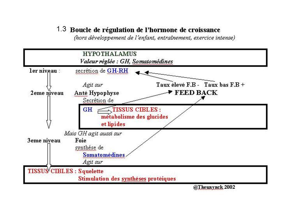 2.3.1 La progestérone et la 17 0H-progestérone La 17 0H-progestérone est ssynthétisée par la théque et la granulosa À partir de j7 La progestérone Est sybnthétisée par le corps jaune au cours de la 2eme partie du cycle LHCG (corps jaune gestationnel) prends le relais des gonadotrophines hypophysaires pour stimuler le maintien du corps jaune Le placenta prends le relais progressivement