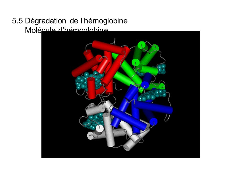 5.5 Dégradation de lhémoglobine Molécule dhémoglobine