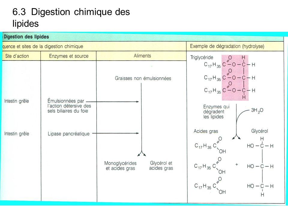 6.3 Digestion chimique des lipides