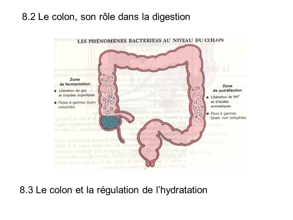 8.2 Le colon, son rôle dans la digestion 8.3 Le colon et la régulation de lhydratation