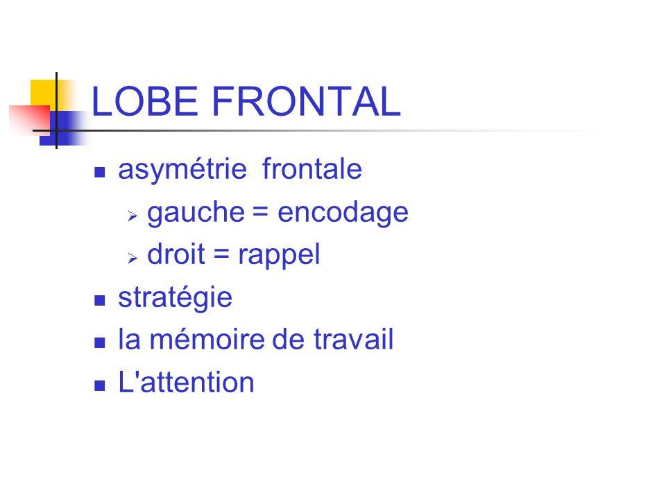 LOBE FRONTAL asymétrie frontale gauche = encodage droit = rappel stratégie la mémoire de travail L'attention