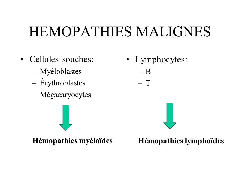 HEMOPATHIES MALIGNES Cellules souches: –Myéloblastes –Érythroblastes –Mégacaryocytes Hémopathies myéloïdes Lymphocytes: –B –T Hémopathies lymphoïdes