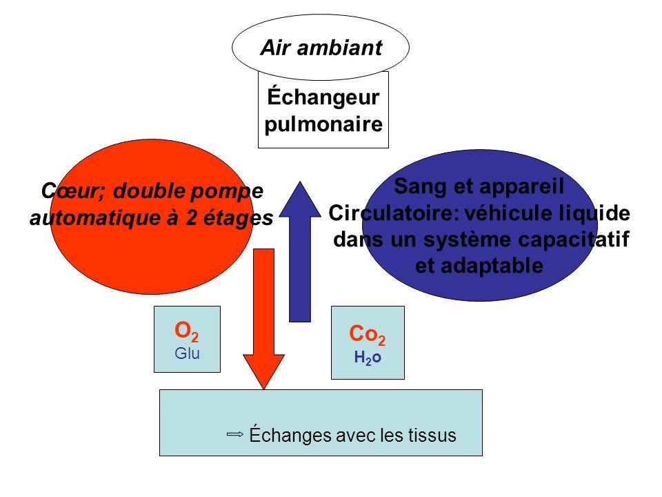 O 2 Glu Co 2 H 2 o Sang et appareil Circulatoire: véhicule liquide dans un système capacitatif et adaptable Cœur; double pompe automatique à 2 étages