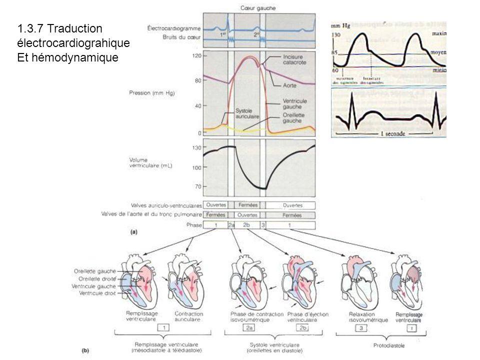 1.3.7 Traduction électrocardiograhique Et hémodynamique