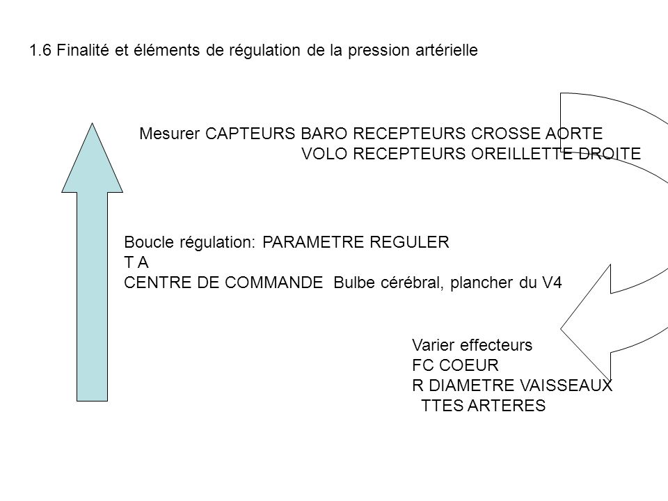 Boucle régulation: PARAMETRE REGULER T A CENTRE DE COMMANDE Bulbe cérébral, plancher du V4 Mesurer CAPTEURS BARO RECEPTEURS CROSSE AORTE VOLO RECEPTEU