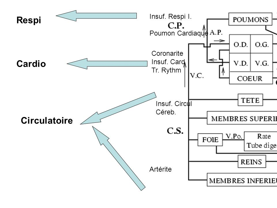 Respi Cardio Circulatoire Insuf. Respi I. Poumon Cardiaque Coronarite Insuf. Card Tr. Rythm Insuf. Circul Céreb. Artérite