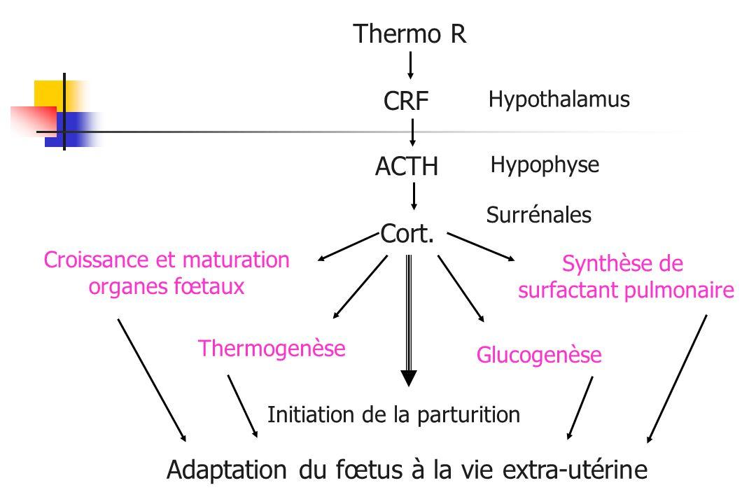 Hypothalamus Hypophyse Surrénales Thermo R CRF ACTH Cort. Initiation de la parturition Croissance et maturation organes fœtaux Thermogenèse Glucogenès