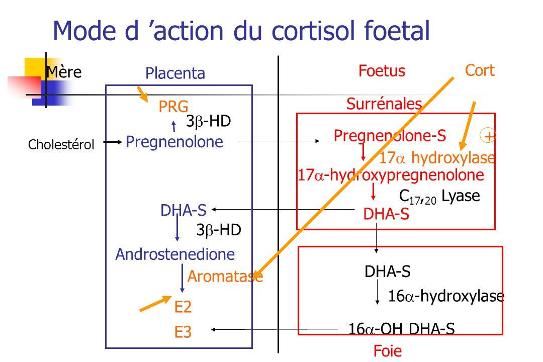 Mère Placenta Foetus PRG Pregnenolone Pregnenolone-S DHA-S Androstenedione E2 E3 Aromatase Surrénales 17 hydroxylase 17 -hydroxypregnenolone C 17, 20