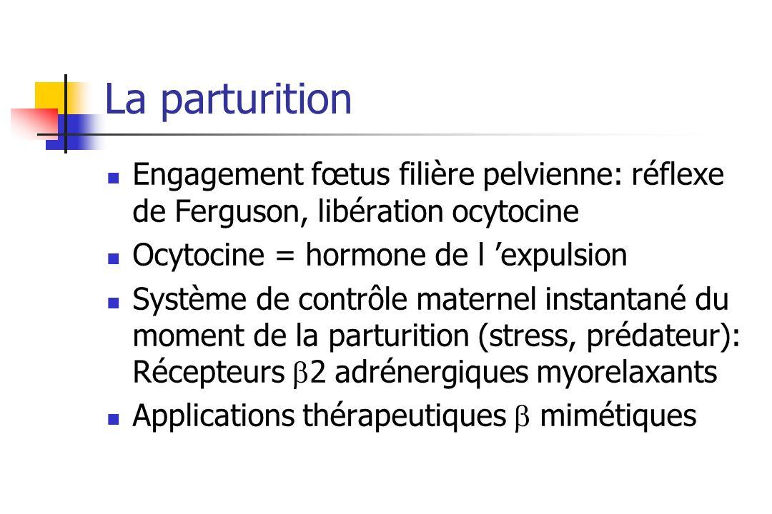 La parturition Engagement fœtus filière pelvienne: réflexe de Ferguson, libération ocytocine Ocytocine = hormone de l expulsion Système de contrôle ma