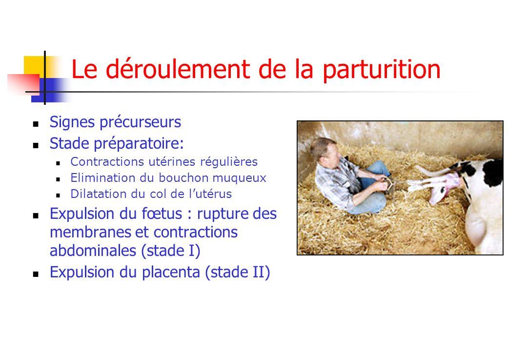Le déroulement de la parturition Signes précurseurs Stade préparatoire: Contractions utérines régulières Elimination du bouchon muqueux Dilatation du
