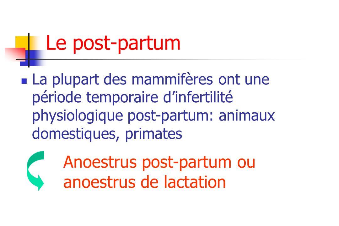 Le post-partum La plupart des mammifères ont une période temporaire dinfertilité physiologique post-partum: animaux domestiques, primates Anoestrus po