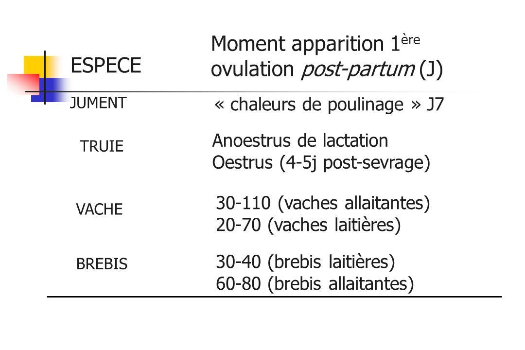 ESPECE JUMENT TRUIE VACHE BREBIS « chaleurs de poulinage » J7 Moment apparition 1 ère ovulation post-partum (J) 30-110 (vaches allaitantes) 20-70 (vac
