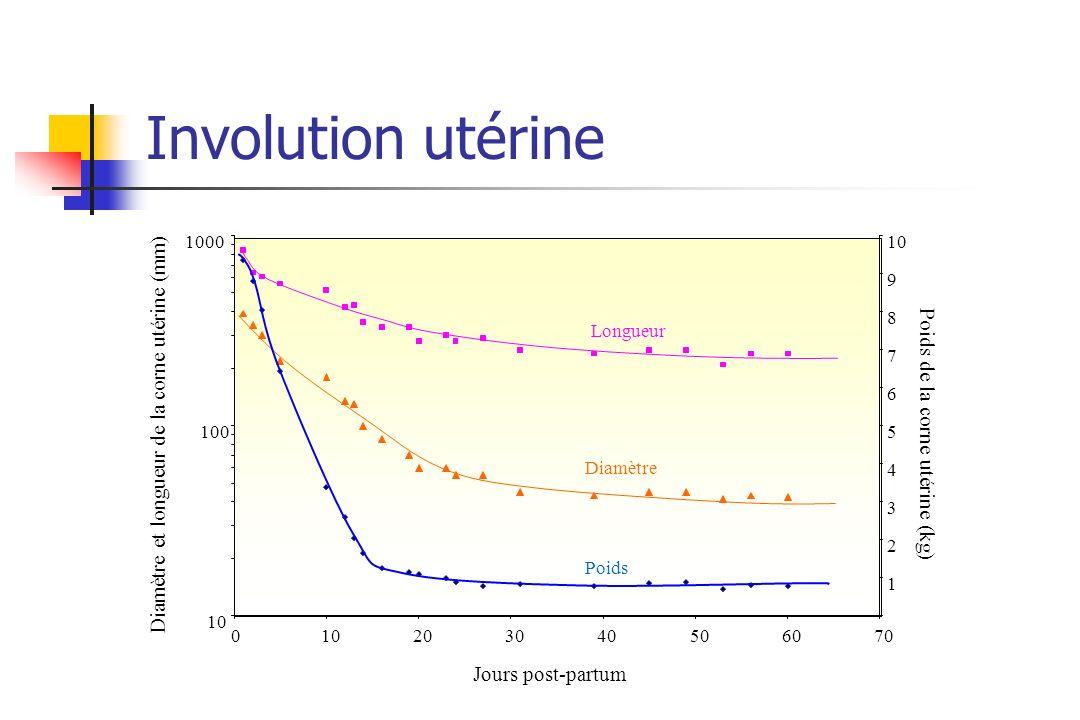Involution utérine 10 100 1000 010203040506070 1 2 3 4 5 6 7 8 9 10 Longueur Diamètre Poids Diamètre et longueur de la corne utérine (mm) Poids de la
