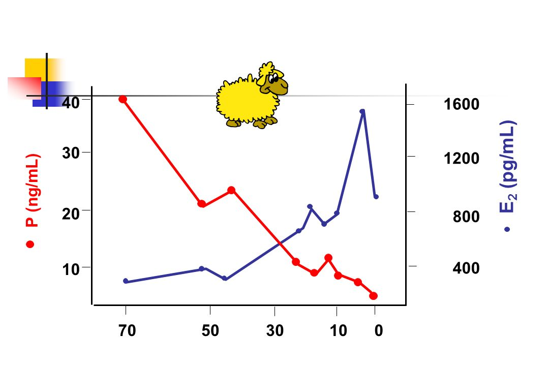 Le post-partum La plupart des mammifères ont une période temporaire dinfertilité physiologique post-partum: animaux domestiques, primates Anoestrus post-partum ou anoestrus de lactation