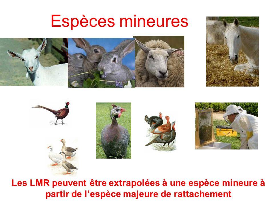 Espèces mineures Les LMR peuvent être extrapolées à une espèce mineure à partir de lespèce majeure de rattachement