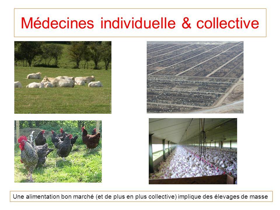 Médecines individuelle & collective Une alimentation bon marché (et de plus en plus collective) implique des élevages de masse