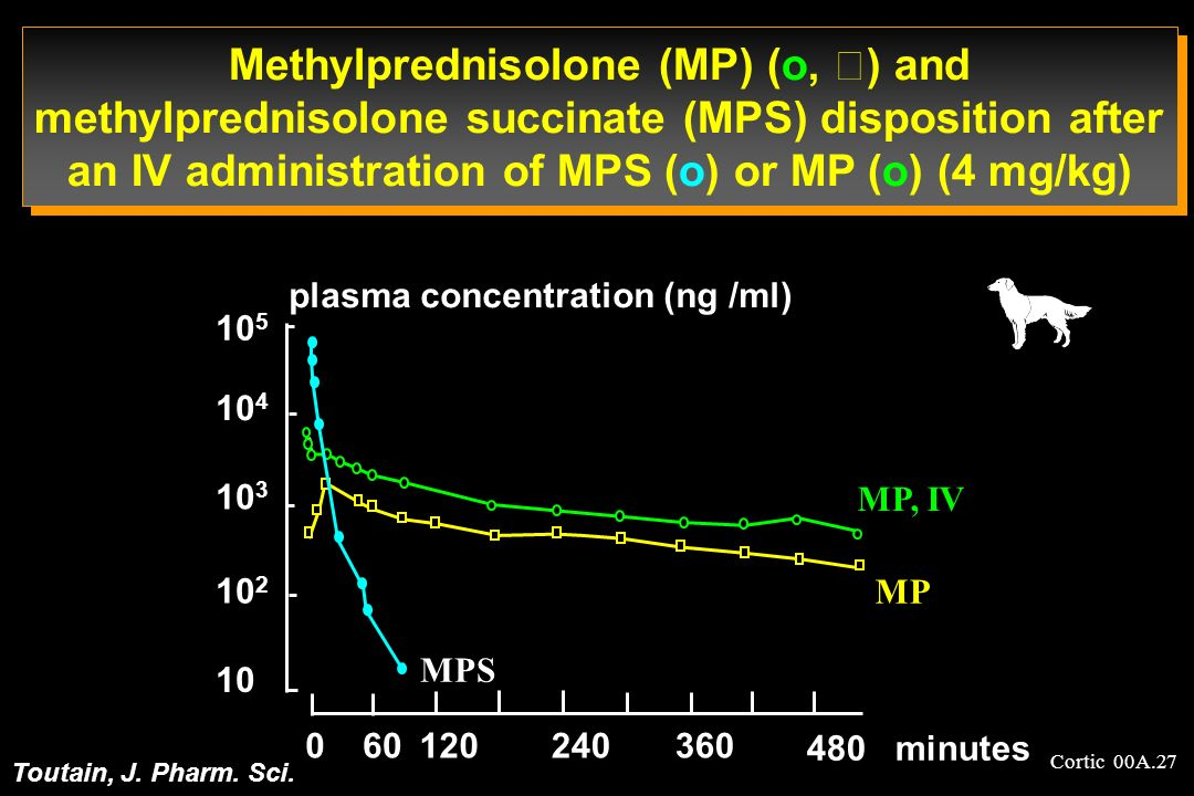 Cortic 00A.27 Methylprednisolone (MP) (o, ) and methylprednisolone succinate (MPS) disposition after an IV administration of MPS (o) or MP (o) (4 mg/k