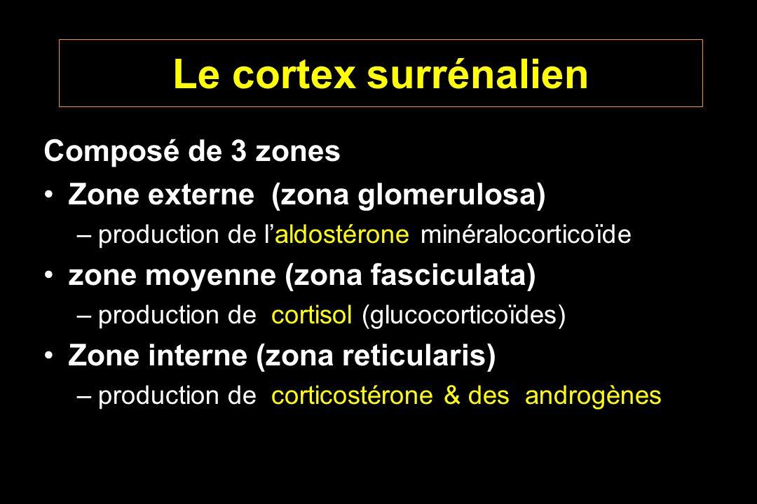 Le cortex surrénalien Composé de 3 zones Zone externe (zona glomerulosa) –production de laldostérone minéralocorticoïde zone moyenne (zona fasciculata