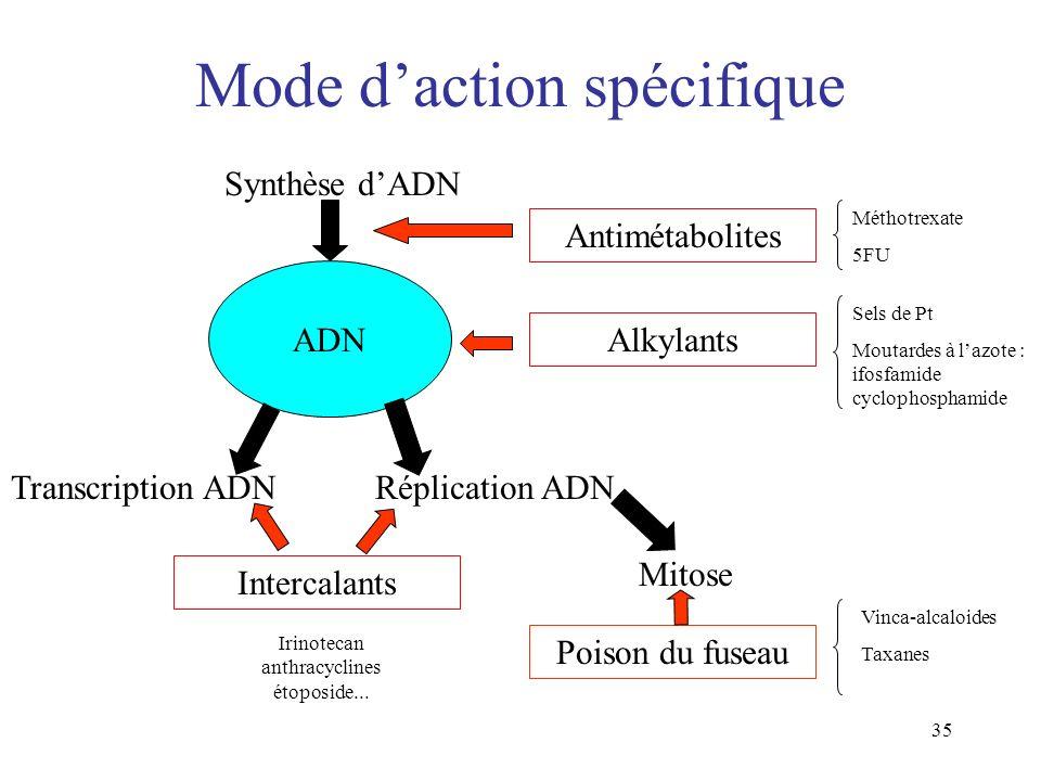 35 Mode daction spécifique ADN Synthèse dADN Transcription ADNRéplication ADN Mitose Antimétabolites Alkylants Intercalants Poison du fuseau Irinoteca