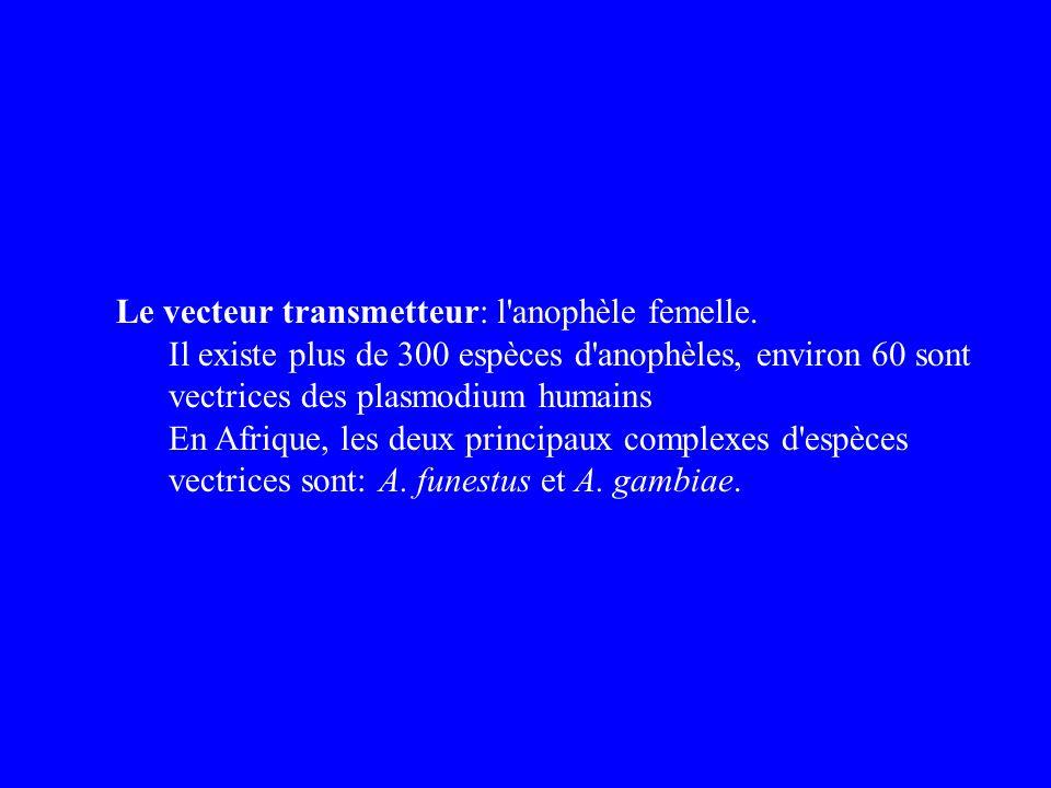Le vecteur transmetteur: l'anophèle femelle. Il existe plus de 300 espèces d'anophèles, environ 60 sont vectrices des plasmodium humains En Afrique, l